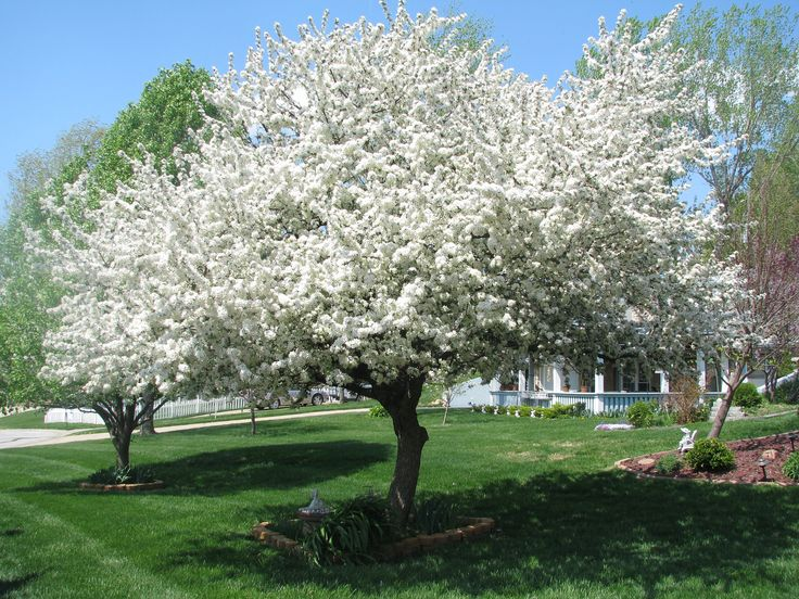 Ornamental Trees And Fruit Trees Trees On The Move