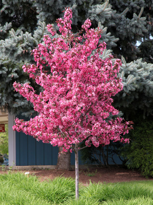 Ornamental trees and fruit trees trees on the move - Planting fruit trees in the fall a garden full of vigor ...